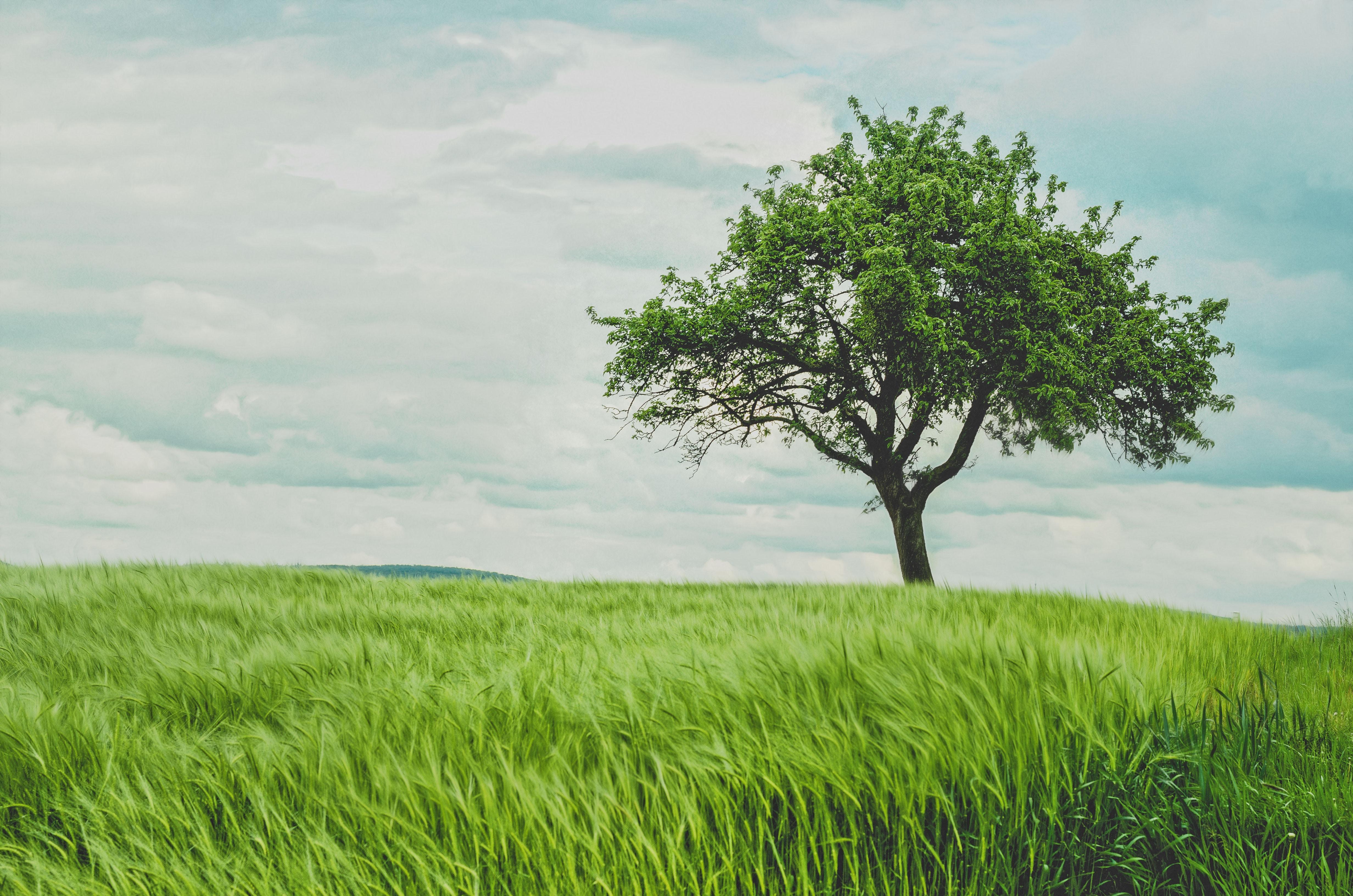 Tree Story – Vanessa Smyth