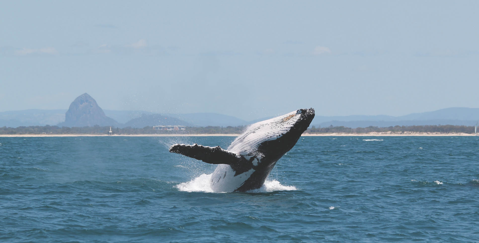 Whale watching on your Winter break