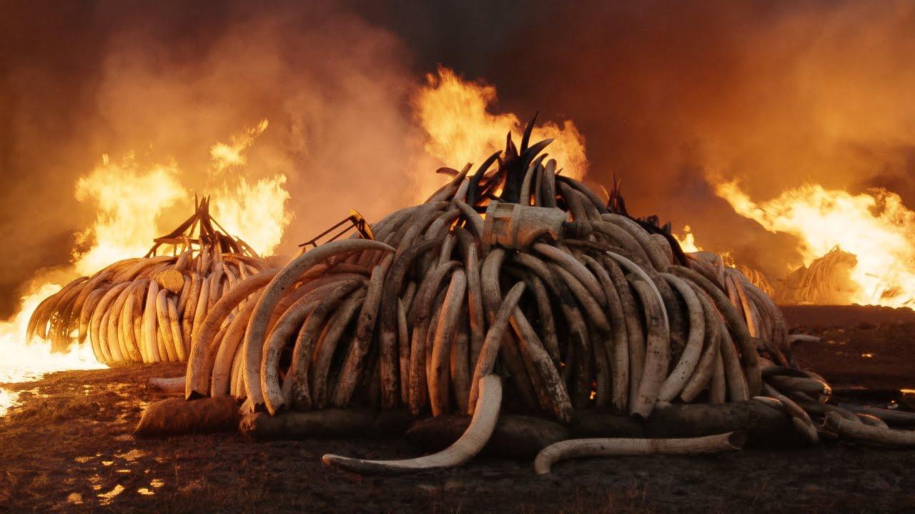 BIFF Review: Anthropocene: The Human Epoch